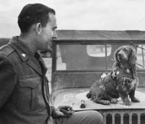 a-hard-mutts-life-military-dogs-in-world-war-ii-2